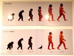 ベンチャーの進化図