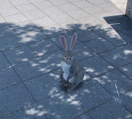 Google検索AR動物「ウサギ」