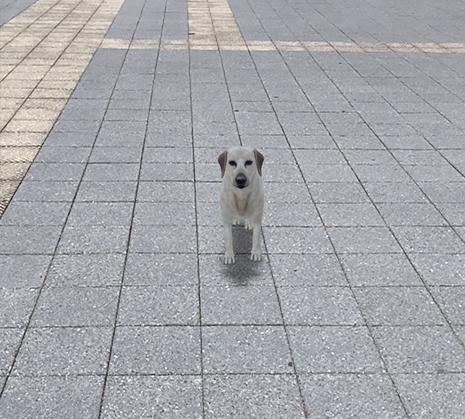 Google検索AR動物「犬」